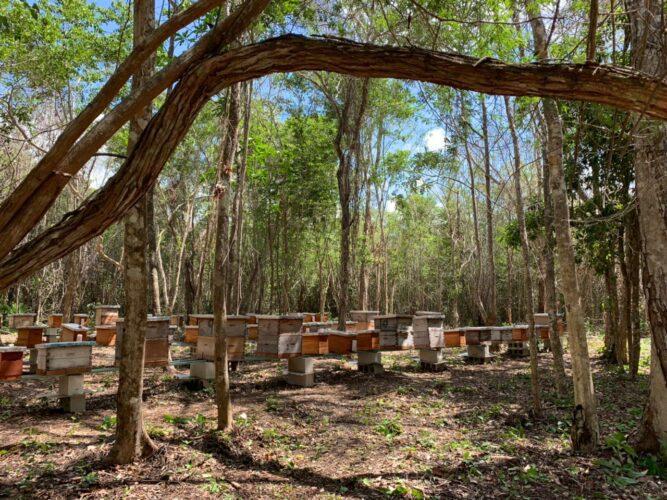 deforestacion1-667x500.jpg