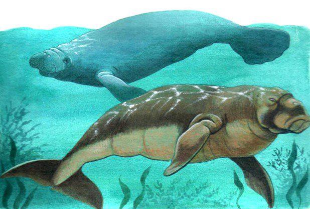 especie-de-manati1-1.jpg