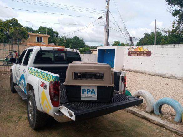 PPA-resguardo2-585x439-1.jpg